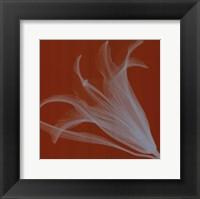 Lily/Silver (Sm) Framed Print