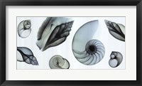 Shell Collection (Teal) Framed Print