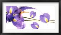 Lucid Iris 1 Framed Print