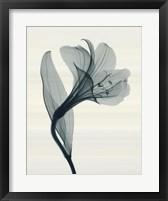 Alstromeria I Framed Print