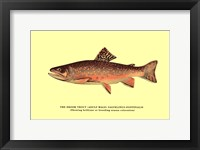 Framed Brook Trout (Showing Brilliant or Breeding Season Coloration)