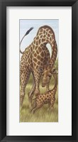 Mama Giraffe With Baby Framed Print