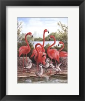 Framed Flamingo 1