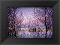 Framed Change - Snowy Trees