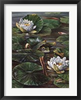 Framed Frog In Lily Pond
