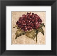 Framed Maroon Flower