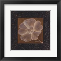 Framed Tan Flower - full bloom