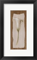 Framed White Cala Lilly