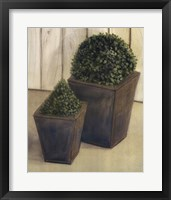 Framed Plants In Pots