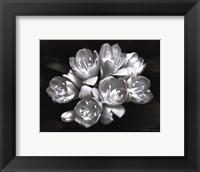 Camellia Bloom Framed Print