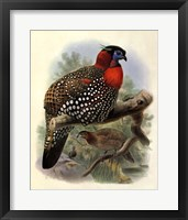 Framed Native Pheasant I
