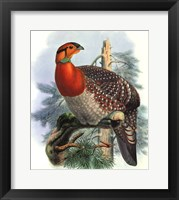 Framed Native Pheasant II