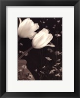 Glowing Tulip II Framed Print