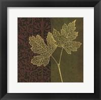 Maple Framed Print
