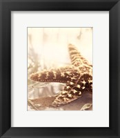 Seashore Starfish Framed Print