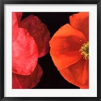 Dual Poppy Left Framed Print