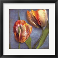 Framed Parrot Tulips I