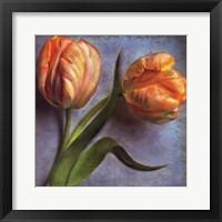Framed Parrot Tulips II