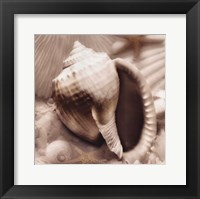 Iridescent Seashell III Framed Print