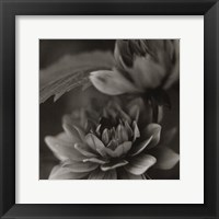 Framed Water Lily II