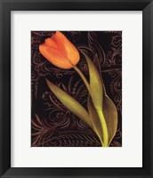 Tulip Manuscript II Framed Print