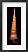 Ligar Screw Shell Framed Print