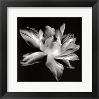 Framed Radiant Tulip I