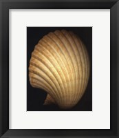 African Fan Scallop Framed Print