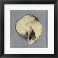 Coastal Shell I Framed Print