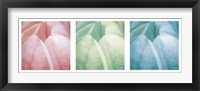 Framed Tulip Trio