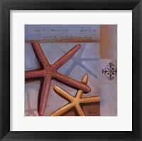 Sanibel Starfish Framed Print
