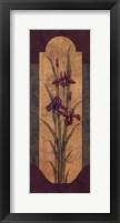 Greek Iris I Framed Print
