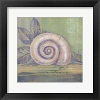Tranquil Seashell III Framed Print