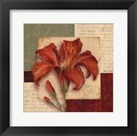 Bella Donna II Framed Print
