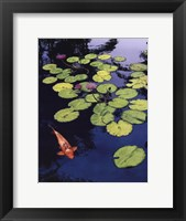 Framed Koi Pond I