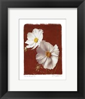 White Cosmos II - Mini Framed Print