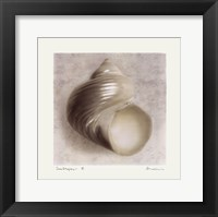 Sea Shapes IV Framed Print