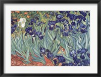 Framed Irises, Saint-Remy, c.1889