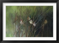 Summer Sparrows Framed Print