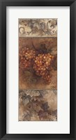 On the Vine III Framed Print