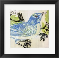 Framed Bluebird
