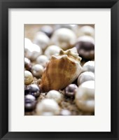 Sea Jewels III Framed Print