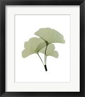 Ginko I Framed Print