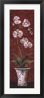 Framed Organic Orchids II