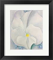 Framed White Pansy