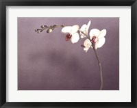 Framed Orchid II