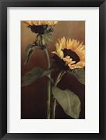 Framed Isabell's Garden II