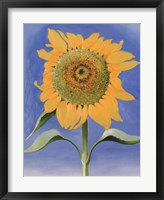 Sunflower, New Mexico, 1935 Framed Print