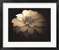 Soft Landing Framed Print