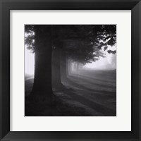 Framed Misty Trees